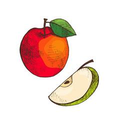 Ripe apple and slice of vitamin fruit icon vector