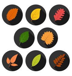set of eight autumn leaves in circles with shadows vector image