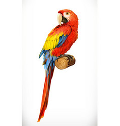Ara parrot Macaw Photo realistic 3d icon vector image