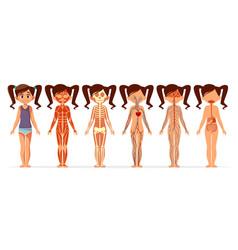 girl body anatomy cartoon of vector image