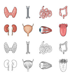kidney bladder eyeball tongue human organs set vector image