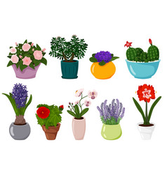 potted flowers set isolated blooming plant vector image