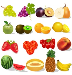 set ripe fruit and berries on white vector image