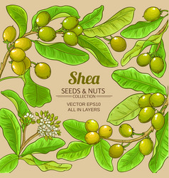 shea branches frame on color background vector image