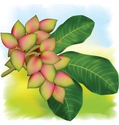 pistachio tree branch vector image