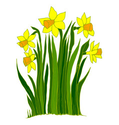 collection of flowers of the narcissus vector image