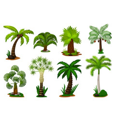 palm trees set isolated coconut palm tree plant vector image
