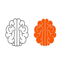 human brain on white vector image