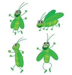 Four grasshoppers vector image vector image