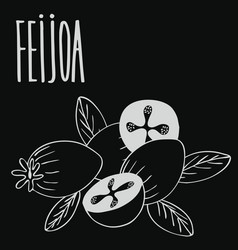 Chalkboard guava fruits or feijoa vector