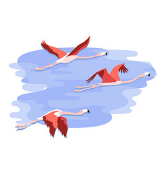Sky and flying flamingos vector