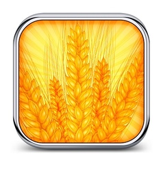 Square icon with ear wheat vector image