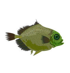 sea green fish isolated on white oceanic fish vector image