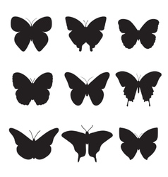 Black butterflies on white background vector image