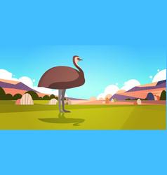 Emu walking on grass in australia desert vector