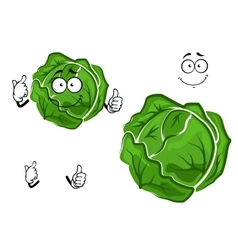 Isolated cartoon green cabbage vegetable vector