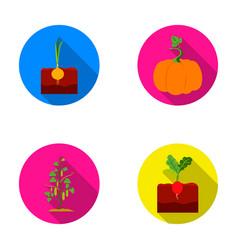 Onion pumpkin and other vegetablesplant set vector