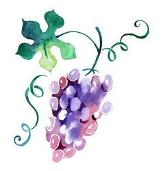 Painted watercolor grape vector image