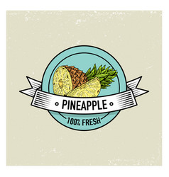 pineapple vintage hand drawn fresh fruits vector image