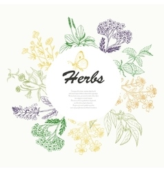 background with herbs in a circle vector image