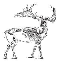 Irish elk vintage vector