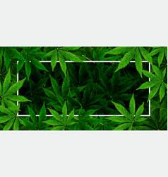 marijuana or cannabis leaf background realistic vector image