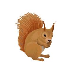 Squirrel wild northern forest animal vector