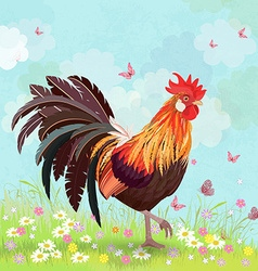 lovely rooster in sunny day vector image