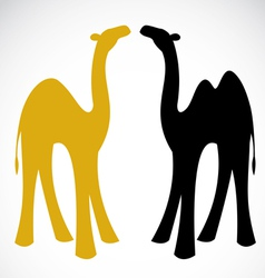 Camel vector image