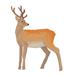 deer wild northern forest animal vector image