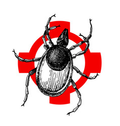 hand drawn wood tick on crosshair vector image
