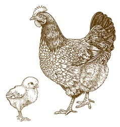 engraving chicken and chick vector image vector image