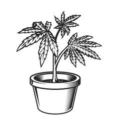 Vintage marijuana plant in pot template vector
