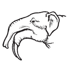 Long jawed mastodon vintage vector