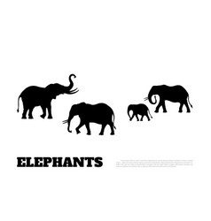 Black silhouette elephants on white background vector