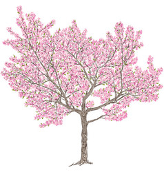 Blooming cherry tree vector
