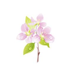 cherry blossom sakura flower floral icon vector image