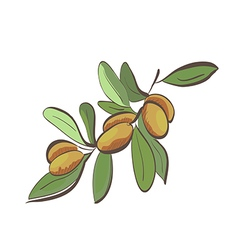Flat argan fruits on branch vector