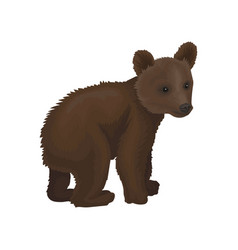 little bear cub wild northern forest animal vector image
