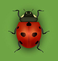 Realistic detailed insect ladybug on a green vector