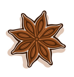 Star anise vector