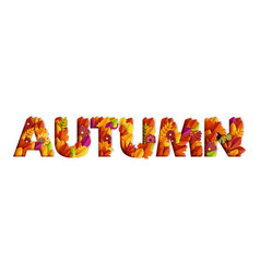 autumn typography design made with leaves vector image