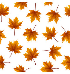 brown maple leaves isolated on white background vector image