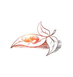 hand drawn natural drugs made herbs vector image