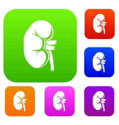 Kidney set collection vector