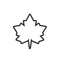 Simple lines icon maple leaf vector