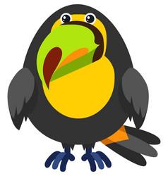 toucan bird on white background vector image