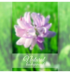 Beautiful Blooming Clover vector image