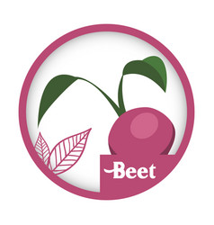 Beet vegetable fresh healthy label vector