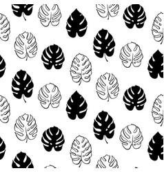 botanical of monstera leaf vector image